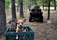 What is wrong with that Chihuahua riding in the milk carton?