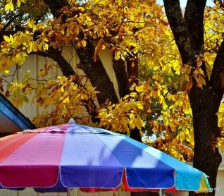 undermyumbrella (1024x896)