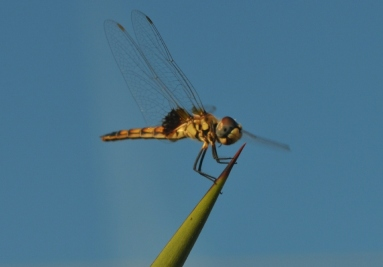Goodbye dragonfly... So long summertime.