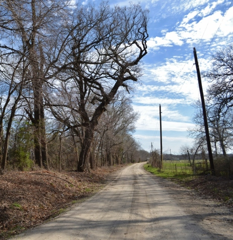 Growing forward on a quiet country lane. (The tree & pole seems to be reaching for one another)
