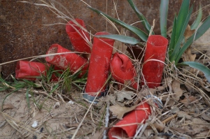 Red Shells