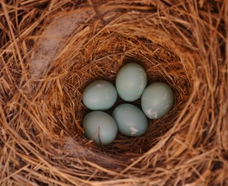 From the Bluebird outside my window.