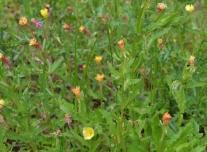 April Flowers (10) (1024x754)