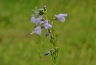 April Flowers (14) (1024x690)
