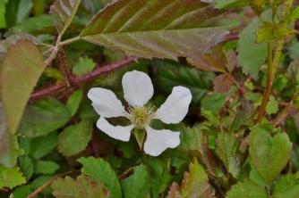 April Flowers (28) (1024x683)