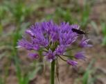 April Flowers (44) (1024x811)