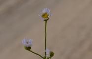 April Flowers (46) (1024x666)