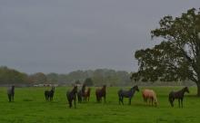 Horses in Rain 3