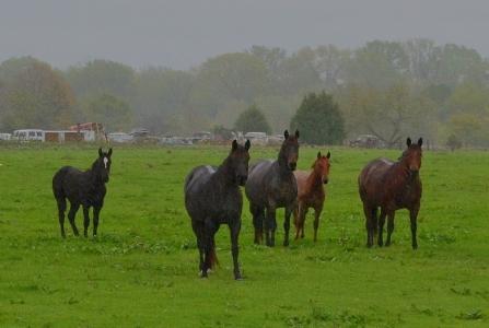 Horses in Rain2