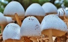mushrooms (4)