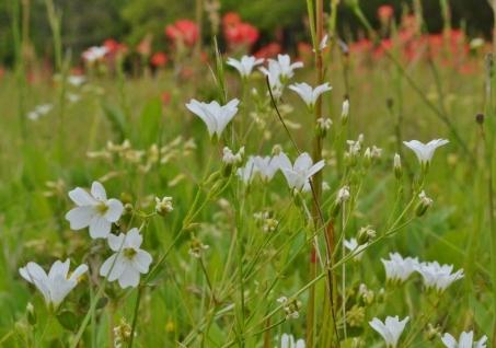 April Flowers (20) (1024x720)