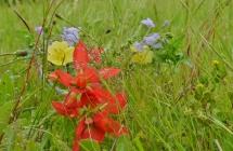 April Flowers (27) (1024x669)
