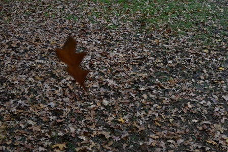 drifting leaf1