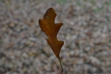 drifting leaf3