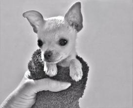 sock puppy (1) (1024x832)