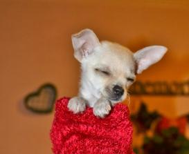sock puppy (5) (1024x837)