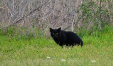 feral cats (3)