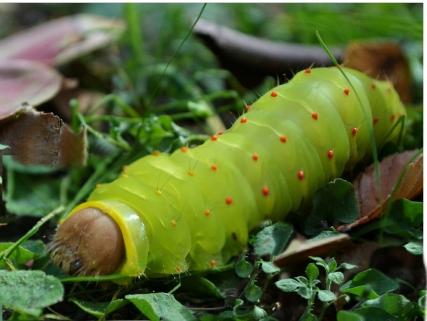 caterpillar 025 (1024x771)