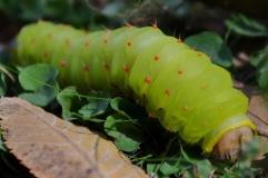caterpillar 027 (1024x683)