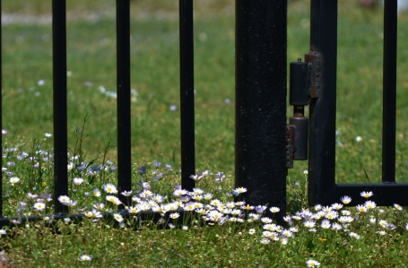 Spring's Gate