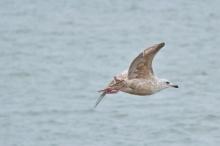 the gulls (1)