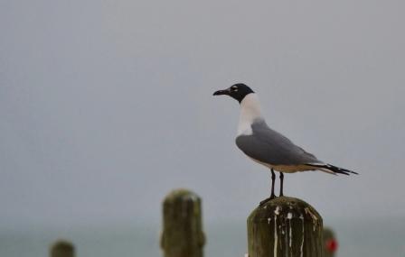 the gulls (2)