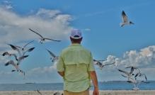 the gulls (3)