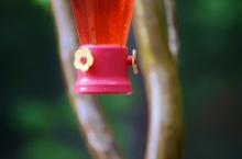 spring feeder
