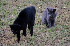 Cool Cats (1)