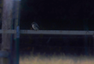 BIRD ON FENCE