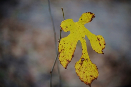Last Leaf Standing (1280x853)