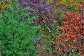 Rainy Autumn East Texas (1024x683)