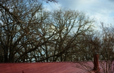 Roof and Bare Trees (1280x823)