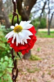 #Daisy (853x1280)