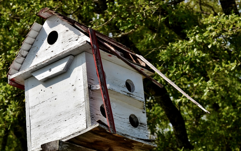 Sparrows Invade (1024x641)