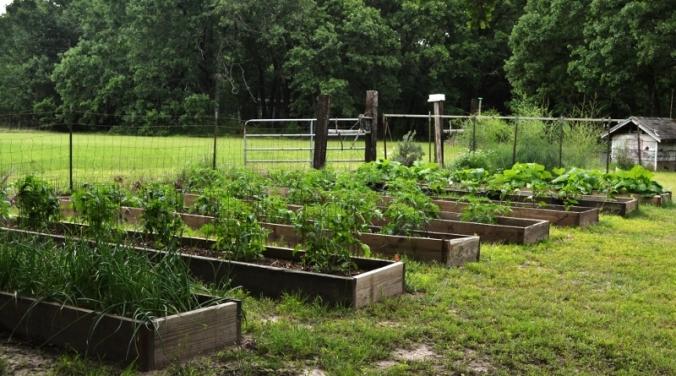 the garden (800x445)