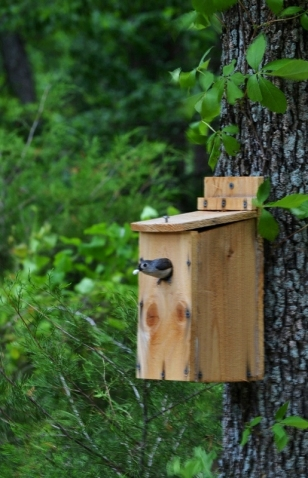 titmouse in birdhouse (1) (515x800)