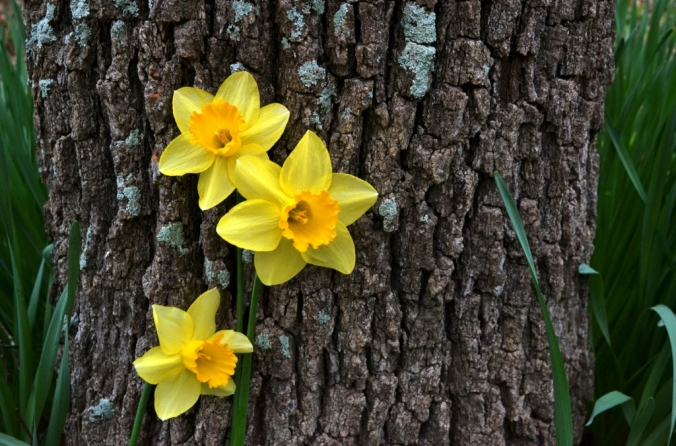 Write Your Own Daffodil and Oak