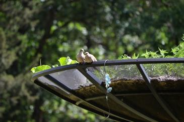 Dove on satellite (1024x683)