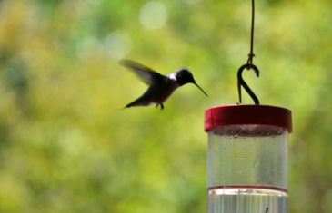 hummingbird at feeder (1024x661)