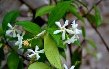 spring blooms (10) (1024x651)