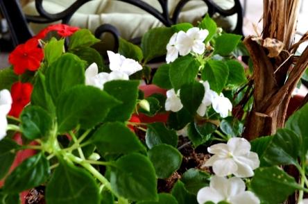 spring blooms (11) (1024x677)
