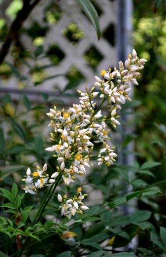spring blooms (9) (660x1024)