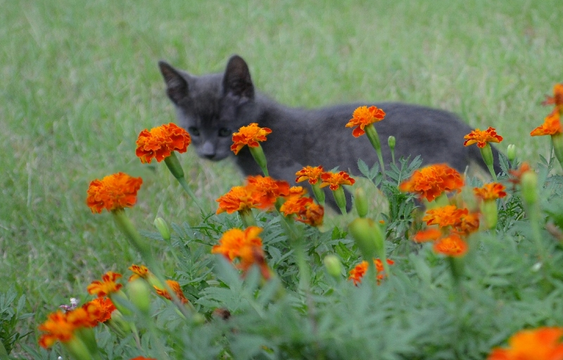 Kitty & Marigold portrait (2) (800x511)