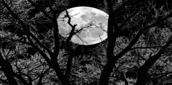Full Moon behind branches black n white