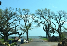Once beautiful live oaks lined a charming street