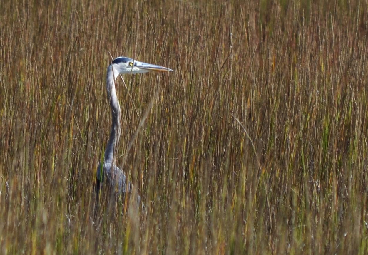 Crane in Saltgrass end of November