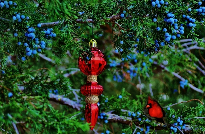 juniper berries red ornament.2 (800x521)