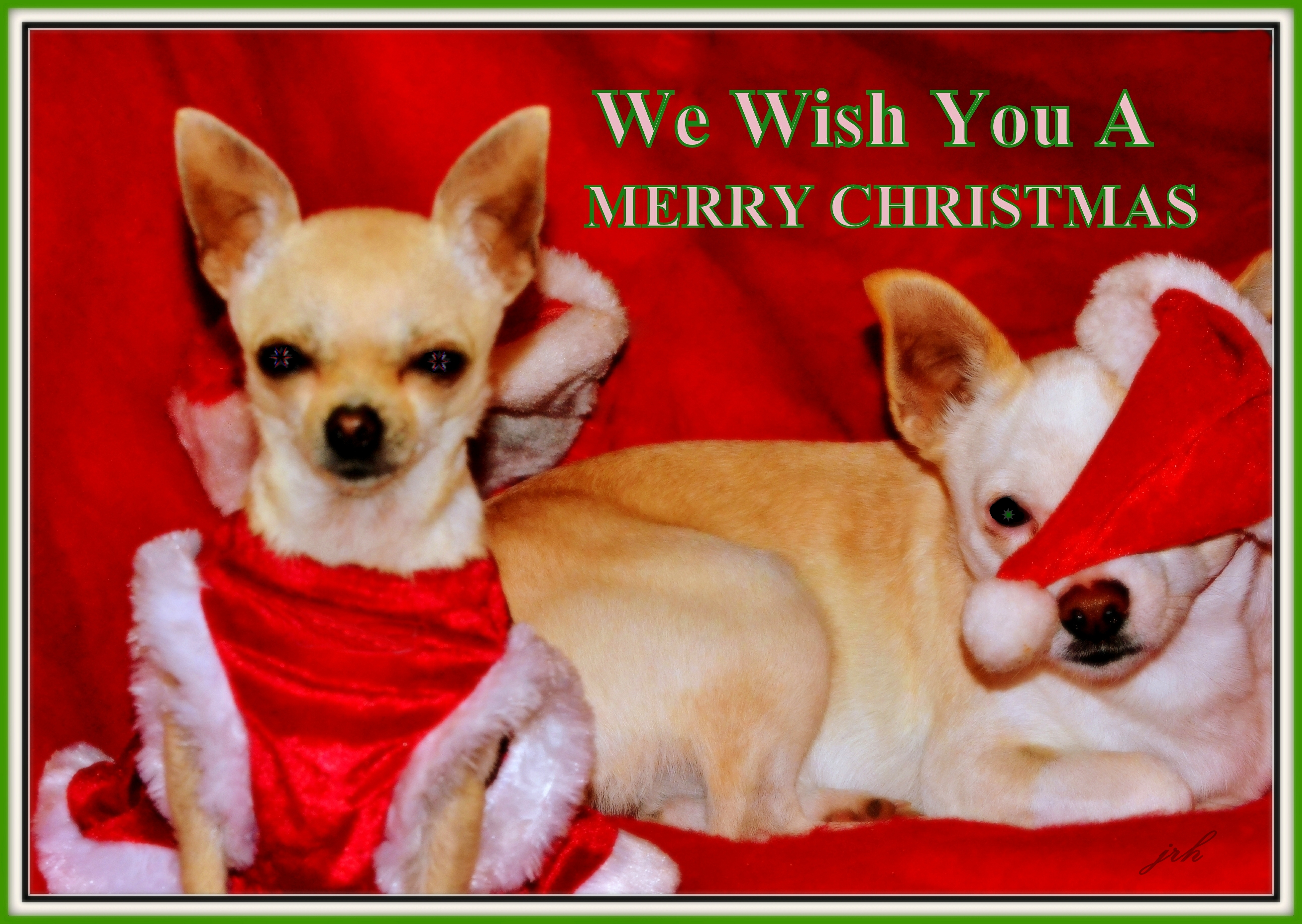 Merry Chritmas from Mia and Buddy card