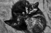 Maddie&Merlin small (10)